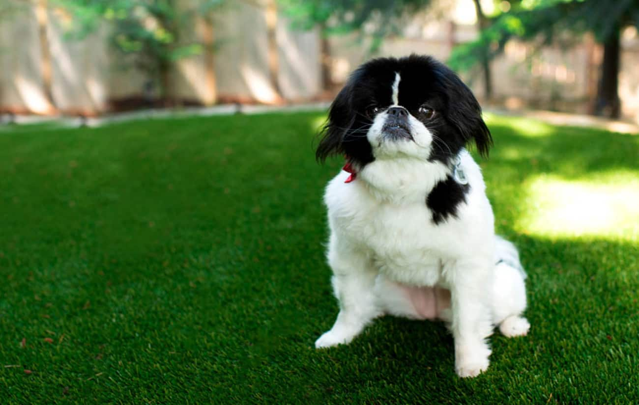Dog on artificial grass